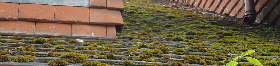 Surrey Hills Roofing - Moss Removal